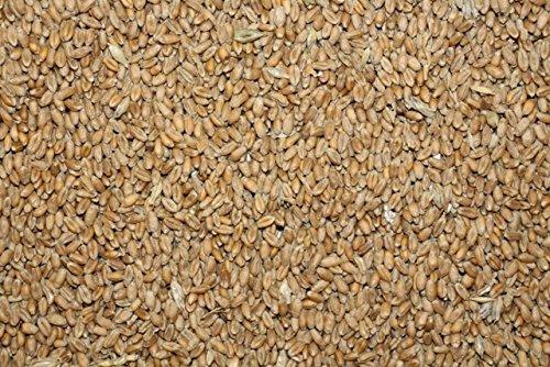 FutterXL 25kg Weizen, direkt vom Landwirt