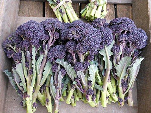 GETSO 500 Semi Cavolo Broccolo Violet tardivi/Orto Verdure Piante