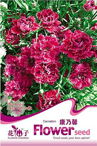 1 Original Pack, 30 graines / Pack, Red Carnation Fleur Dianthus Caryophyllus Herbes # A003