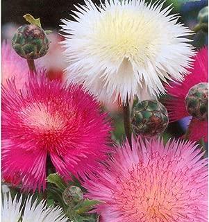 90 Seeds Sweet Sultan Fragrant Cut Flower Seeds #GC05