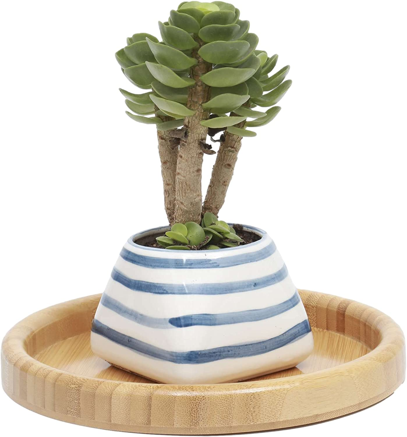 Touch Miss 5% OFF Ceramic Planter Small Pots Plants 9. 1 Cheap mail order specialty store for of Piece