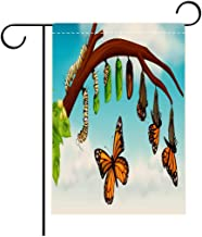 Hayden Harpergfxnjnjn1a Garden Flag Outdoor Flag House Flag Banner A Butterfly Life Cycle Decorated for Outdoor Holiday gardens20x36in