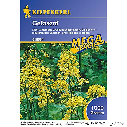 Gelbsenf - 1 kg
