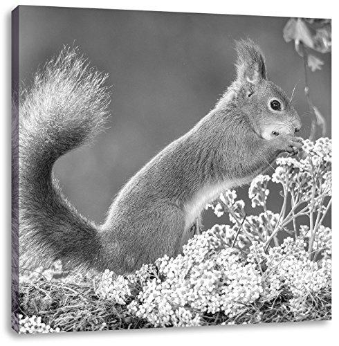 Pixxprint Nagendes Eichhörnchen im Moos als Leinwandbild   Größe: 70x70 cm   Wandbild   Kunstdruck   fertig bespannt