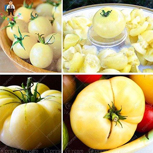 100pcs blanc Graines Tomate Big santé Graines rares Heirloom organiques non ogm semences Bonsai jardin Plantes en pot