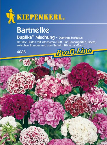 Sperli Blumensamen Bartnelken Duplika...