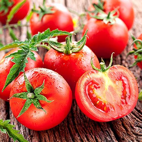 北海道 南幌町産 ミニトマト4種詰合わせ 3kg 南幌町明るい農村ネットワーク とまと トマト 野菜 お取り寄せ