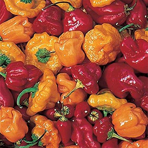 David's Garden Seeds Pepper Hot Caribbean Mix 7334 (Multi) 50 Non-GMO, Open Pollinated Seeds