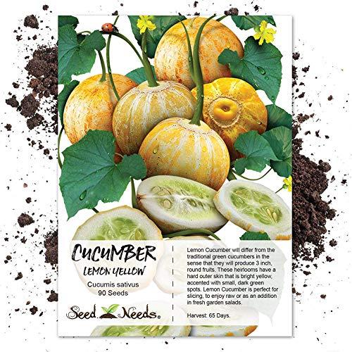 good01 100 Stücke Lemon Gurke Gemüse Obst Samen | Cucumis Sativus Gartenpflanzen Gurkensamen