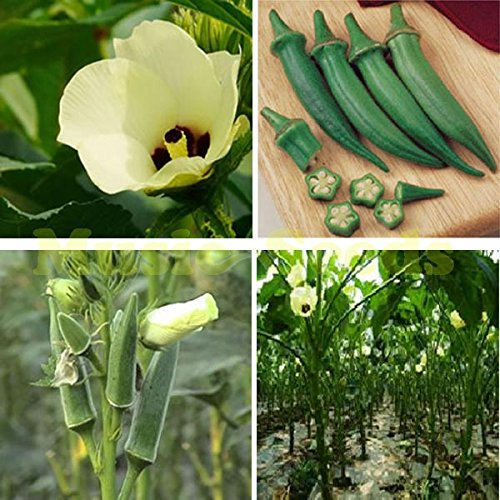 SeedsAndPlants Jardin des Plantes 200 graines Red Hot Spicy long Chilli Pepper, légumes Patio planter des graines