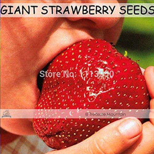 500 graines / Paquet, Super Géant Strawberry Fruit Graine Pomme de taille jardin
