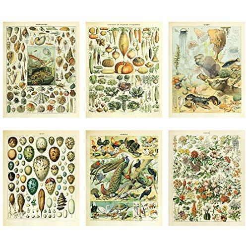 Meishe Art Poster Jahrgang Plakatdruck Plakate Drucken Kunstdrucke Biologie Botanische Die Wissenschaft Wand Decor Meerestiere Tiere Muscheln Gemüse Vögel Rassen Arten Eier Blumen Blühen Florale 6pcs
