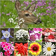 Bulk Package of 30,000 Seeds, Deer Resistant Wildflower Mixture (100% Pure Live Seed) Non-GMO Seeds by Seed Needs