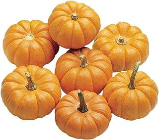 Burpee Jack Be Little Pumpkin Seeds 50 seeds