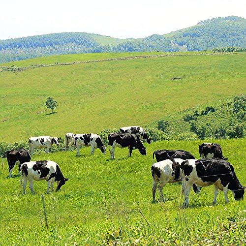 ご飯のお供 北海道産 十勝 牛しぐれ 90g瓶 単品