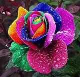 100 piezas / bolsa de 16 tipos de semillas de rosa raras Semillas Semillas de flores de color Bonsai Inicio planta en maceta del jardín del envío del negro