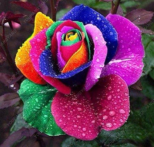 100pcs/sac 16 sortes de graines Rose rares Couleur Bonsai Graines de fleurs jardin Plante en pot Graines Livraison gratuite Noir