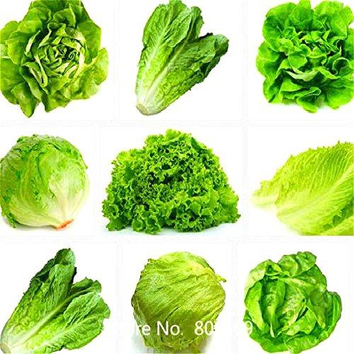 100 pcs/sac à légumes Graines Allium Cepa, Oignon Graines, Oignon rouge