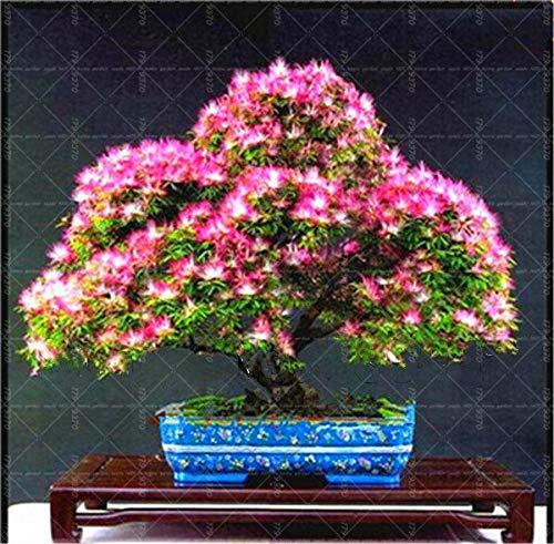 Bloom Green Co. El tomate raro de 100pcs siembra la verdura y el amperio orgánicos de Bonsai; Semillas de frutas, plantas en macetas para cultivos de invernadero en el hogar y el jardín: 7