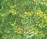 Flavorful Herb Fennel (Foeniculum Vulgare) Highly Aromatic 100 Seeds