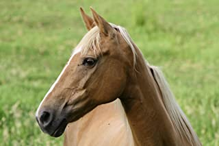 Best pictures of quarter horse stallions Reviews