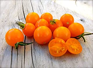 Best big sungold select tomato Reviews