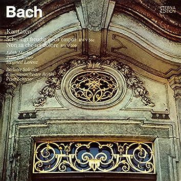 Bach: Schwingt freudig euch empor, BWV 36c / Non sa che sia dolore, BWV 209