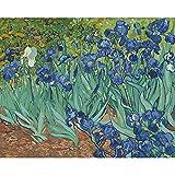 Pintura al óleo por números, de Vincent Van Gogh, pintura al óleo por número, kit de cuadro de arte para el hogar, sala de estar, decoración A3, 50 x 70 cm
