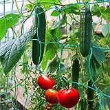 Miuezuth Trellis Netting for Climbing Plants - Heavy Duty Garden Trellis Netting for Cucumber, Vine, Fruits & Vegetables Tomato Plants Trellis Net, Climbing Vining Plants (16.4' x 6.6'Ft)