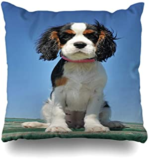 Ahawoso Throw Pillow Cover Decorative Square 18x18 Blue Spaniel Young Puppy Cavalier King Charles Tricolor Pet Animals Dog Wildlife Cocker Outdoors Baby Zippered Pillowcase Home Decor Cushion Case