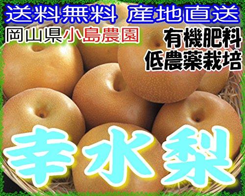 産地直送 低農薬 有機肥料栽培 岡山産 幸水梨 約4キロ 3L サイズ 大玉8〜9玉 産地箱入 贈答向け品質