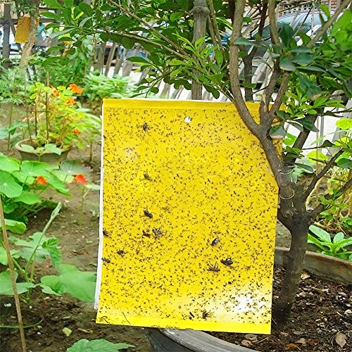 20 Stücke Gelbfalle, Gelbtafeln, Gelbsticker, Doppelseitige gelbe klebrige Fliegenfallen, perfekt gegen Ungeziefer in Ihrem Garten- Gegen Trauermücken, Blattläuse, Minierfliegen und weiße Fliegen