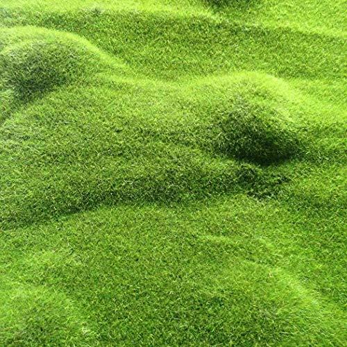 LEANO Moss Seeds,Ground Cover Evergreen Moose Lawn Moss Garden - Green Plant, Decorative Grass for Garden, Bonsai Bed/Meadow