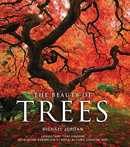 The Beauty of Trees (English Edition)
