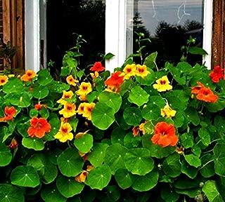 Amazon.es: GardenSeedsMarket - Jardinería: Jardín