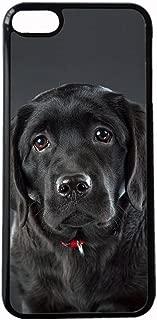 Specificity Case Hard Plastics Women On Touch6 Ipod Print Labrador Retriever