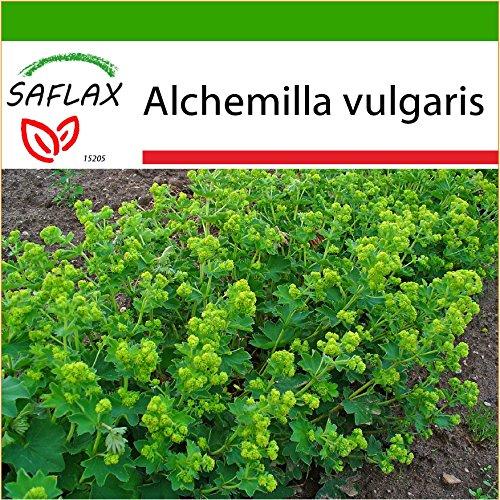 SAFLAX Heilpflanzen Frauenmantel 100