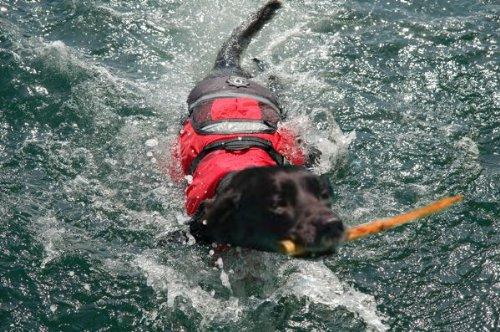 Crewsaver Large Dog Lifejacket. TOP KWALITEIT PetFloat Buoyancy hulp voor uw hond. Neem aan boord van uw boot kajak of kano. Houd uw hond veilig in de buurt van water.