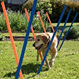 PAWISE Pet Dogs Outdoor Games Agility Exercise Training Equipment Agility Starter Kit Jump Hoop Hurdle Bar 12PCS/116CM