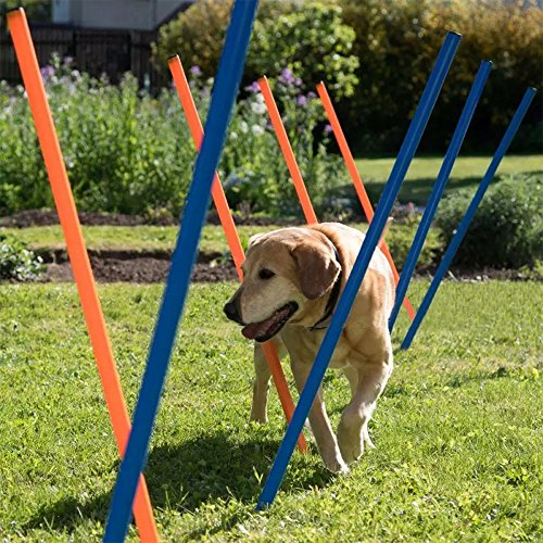 PAWISE Pet Dogs Outdoor Games Agility Exercise Training Equipment Pet Training Dog Weave Poles