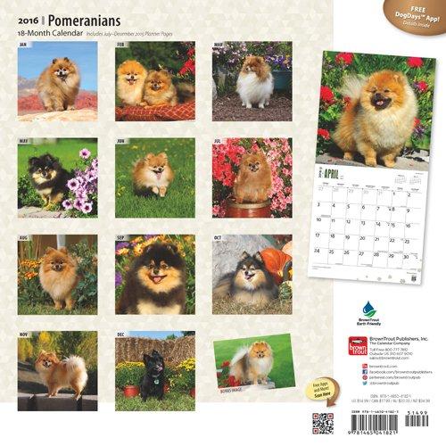 Zwergspitz Leinengarderobe Tierisch-tolle Geschenke Pomeranian Schl/üsselbrett Garderobe mit Hundemotiv