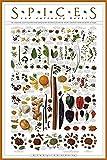 Poster mit Gewürzen und kulinarischen Kräutern, 61 x 91