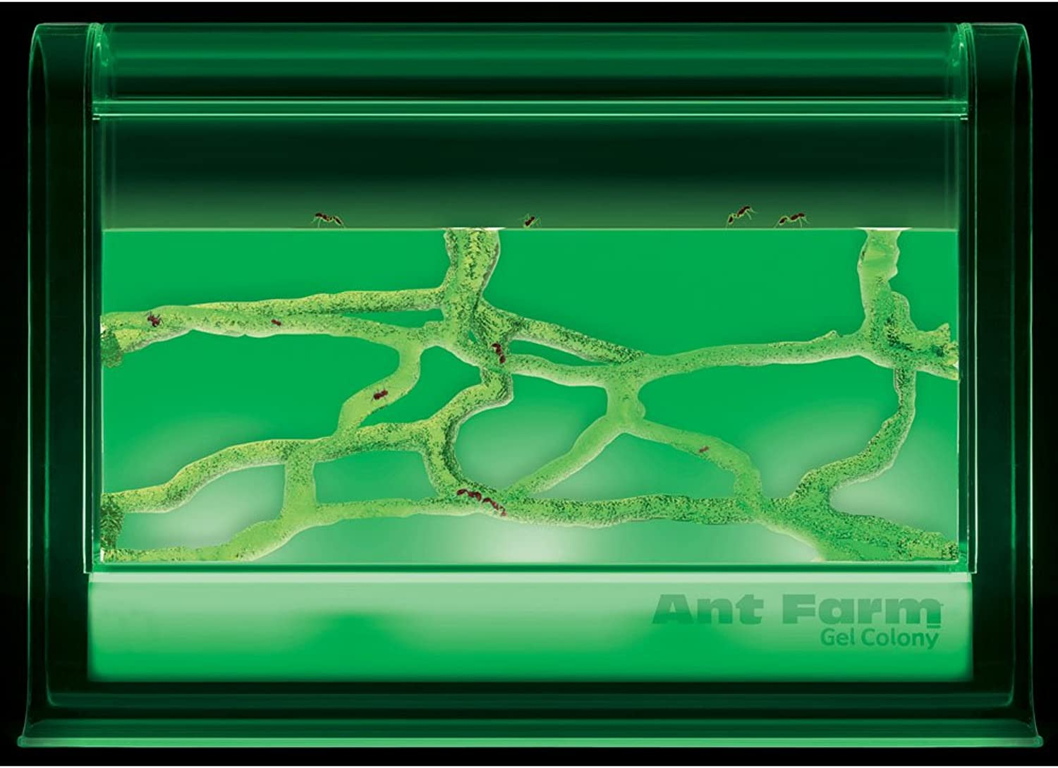 Uncle Milton Ant Farm Illuminated Gel Colony