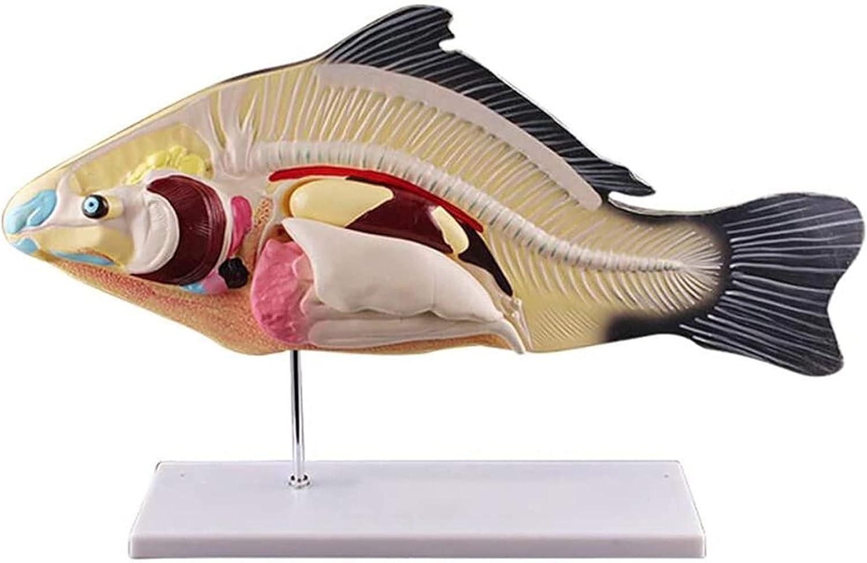Labs Fish Dissection Model Soldering with Viscera Biologi Organ Very popular Detachable