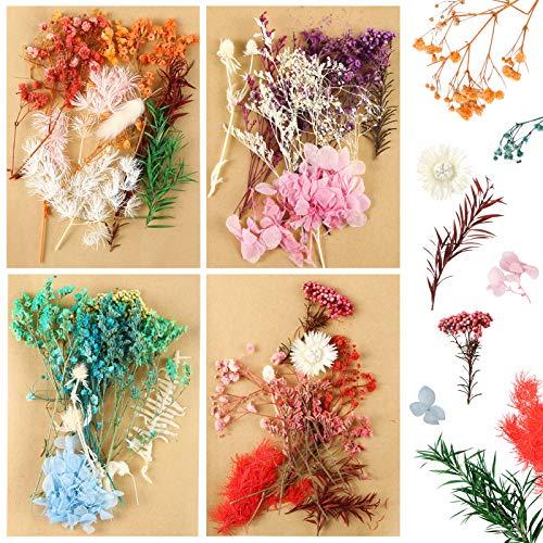 Auihiay Real Dried Leaf Flowers - Mehrere Bunte gepresste Blumen für Bastelharz Schmuck Scrapbooking Herstellung von Kunsthandwerk DIY Zubehör