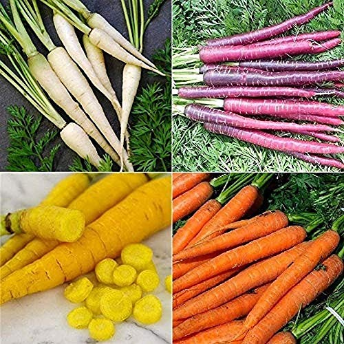 1400 Non-GMO Seeds Collection Set Carrot (Multi) 4 Varieties Can Be Harvested for Many Years Full of Vegetable Garden Efficient Outdoor Planting