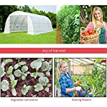 MELLCOM 20' x 10' x 7' Greenhouse Large Gardening Plant Hot House Portable Walking in Tunnel Tent, White 11 【8 ROLL-UP SIDE WINDOWS】-The green house eight roll-up windows have mesh netting to allow for cross ventilation and climate control. 【HEAVY DUTY STEEL FRAME】-Walk-in Garden Greenhouse solid steel construction with a galvanized finish, which is resistant to rust, chipping, and peeling. 【TRANSPARENT PLASTIC COVER】-The tough, durable and transparent PE plastic cover protects plants while allowing nourishing sunlight to pass through. The cover can be easily attached to the frame with the included tethers and single-sided tape.