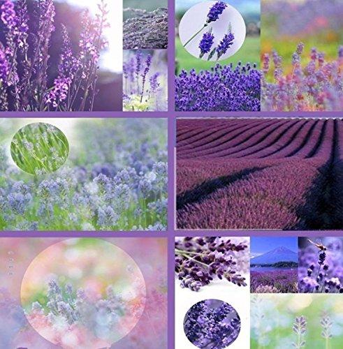graines de fleurs fraîches 100 couleurs mixtes ont augmenté graines et 100 graines de lavande seulement 2 $