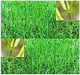 Bermuda Grass Seeds
