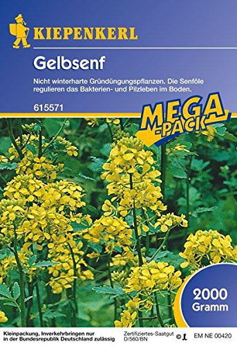 Kiepenkerl Gelbsenf, 2 kg